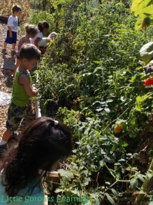 Harvesting-Gardening with Kids
